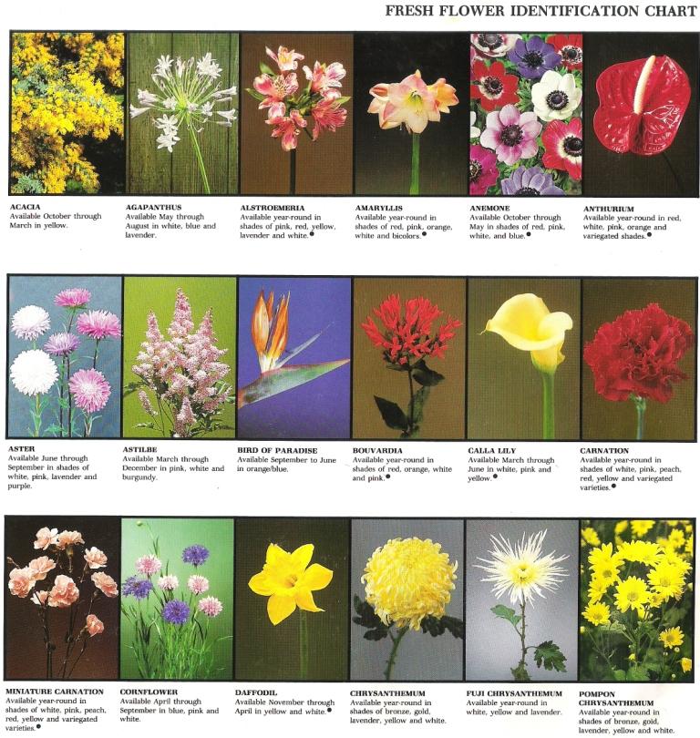 Fresh Flower Identification Chart Rosies Flower Shop